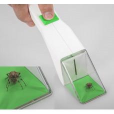Snapy insektfanger - edderkopper, fluer, bier, hvepse og andet kryp.